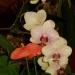 Parc floral de la Court d'Aron (5)