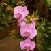 Parc floral de la Court d'Aron (6)