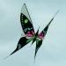 Cerf-volant (10)