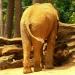 Éléphant d'Afrique (3)