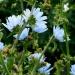 Fleurs champêtres (3)