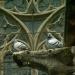 Les gargouilles de la cathédrale (4)