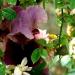 Le temps des iris (4)
