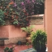 Le jardin Majorelle (10)