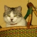 Mon chat Théo (2)