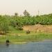 Les rives du Nil (18)