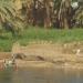 Les rives du Nil (13)