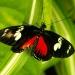 Jolis papillons (5)