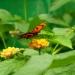 Jolis papillons (7)