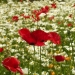 Carré fleuri