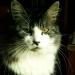 Mon chat Popy