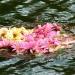 Radeau de fleurs