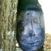 Quand les branches deviennent visages (1)