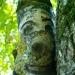 Quand les branches deviennent visages (4)